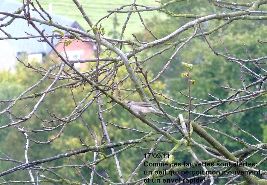 2011: La bio-diversité dans mon jardin.... oiseaux, mouotns, nénuphars. - Page 4 00236