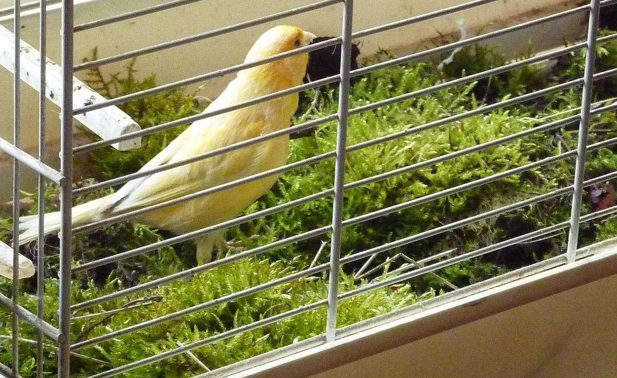 2012. dans ma prairie. mouotns oiseaux renards 00258