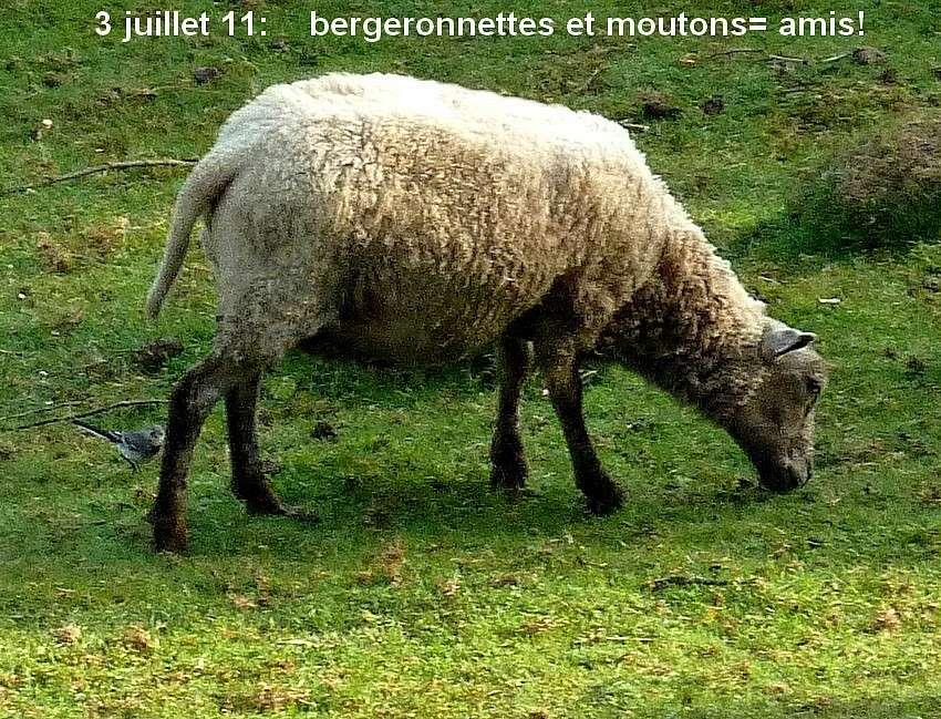 2011: La bio-diversité dans mon jardin.... oiseaux, mouotns, nénuphars. - Page 3 00311