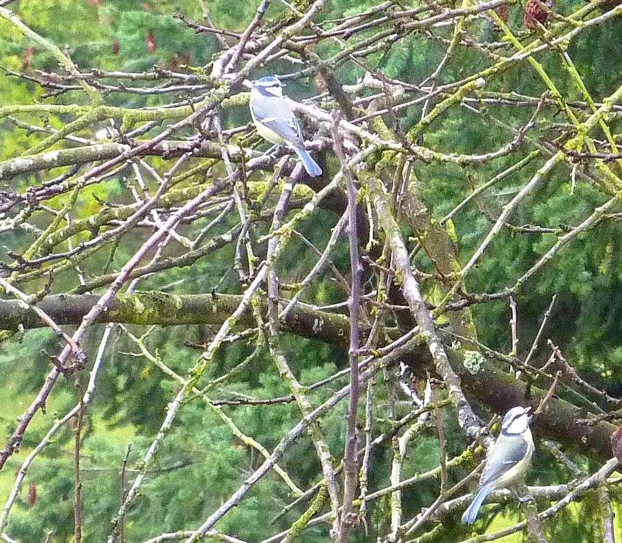 2011: La bio-diversité dans mon jardin.... oiseaux, mouotns, nénuphars. - Page 4 00331