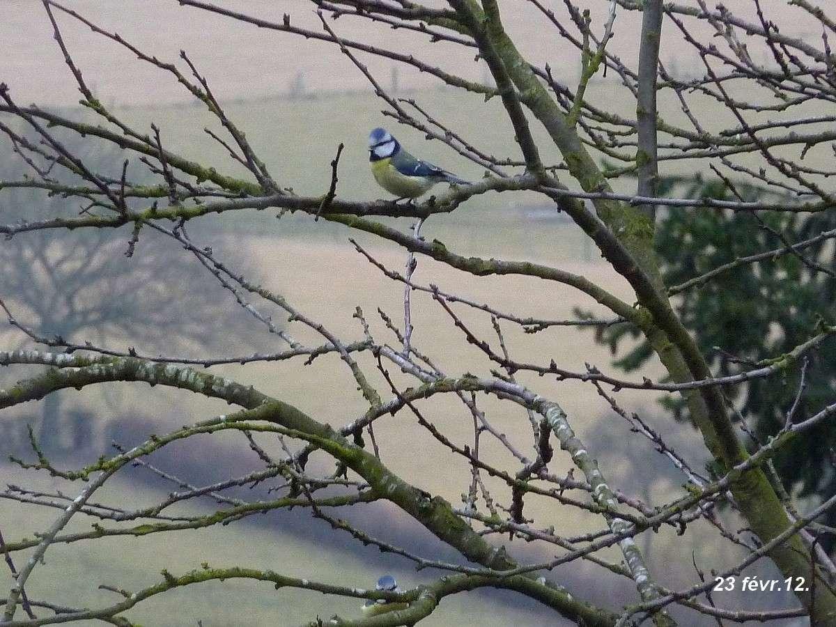 2012. dans ma prairie. mouotns oiseaux renards 00345