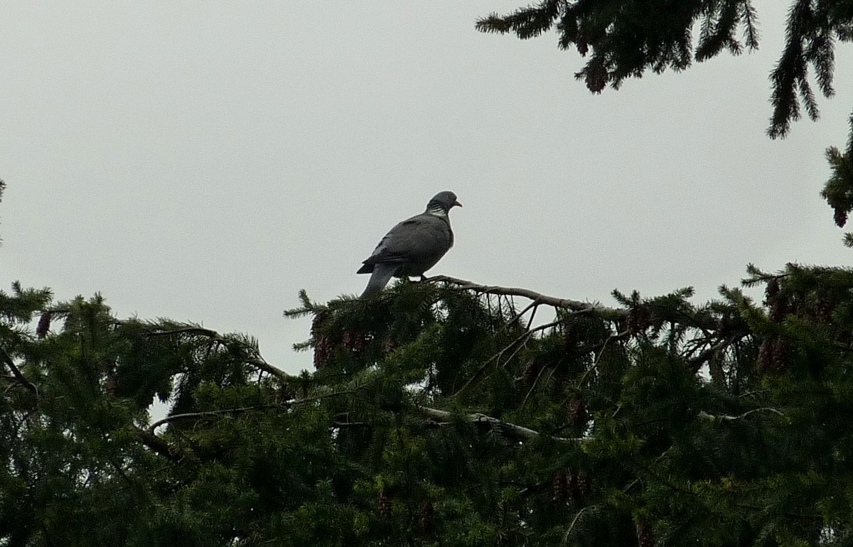 2012. dans ma prairie. mouotns oiseaux renards 00347