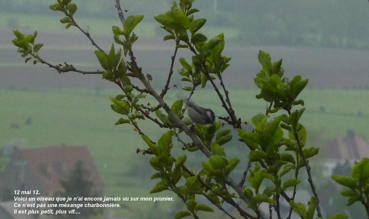 2012. dans ma prairie. mouotns oiseaux renards - Page 2 00352