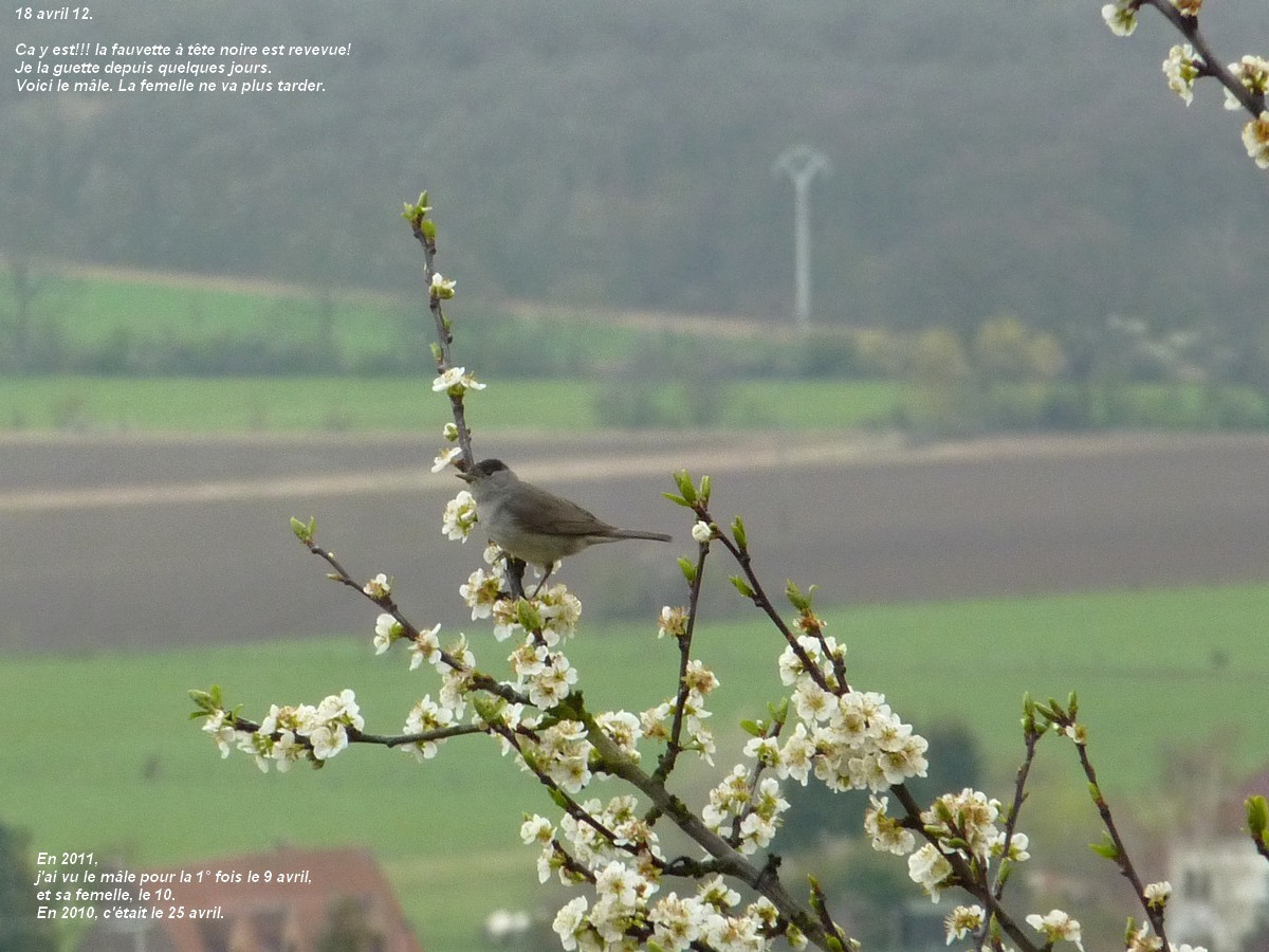 2012. dans ma prairie. mouotns oiseaux renards 00442