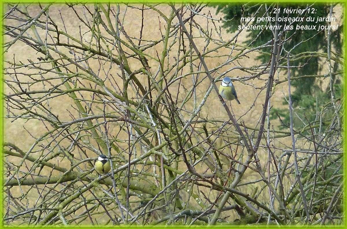 2012. dans ma prairie. mouotns oiseaux renards 00537