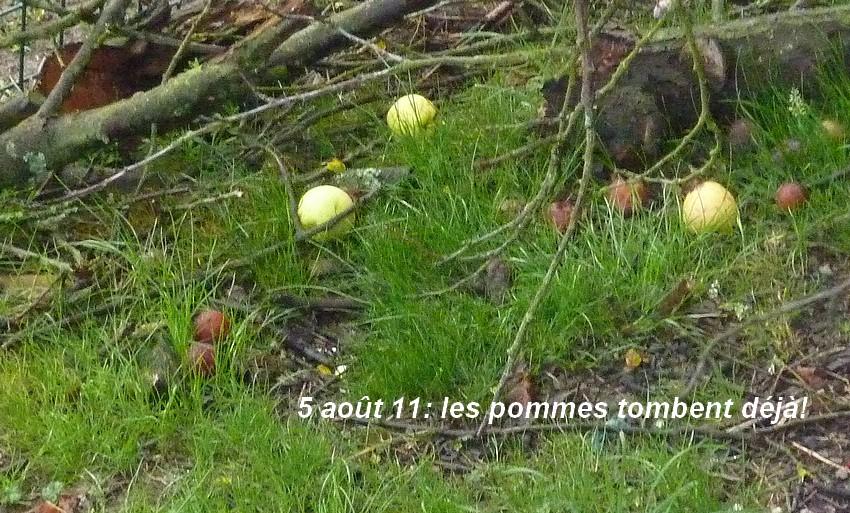 2011: La bio-diversité dans mon jardin.... oiseaux, mouotns, nénuphars. - Page 3 00614