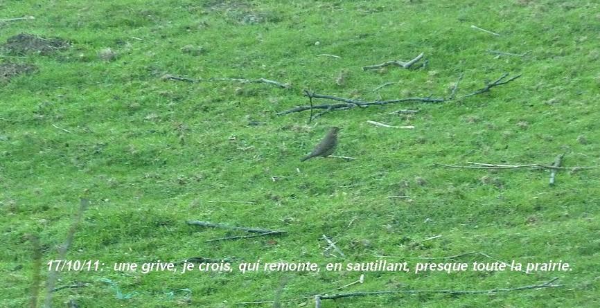 2011: La bio-diversité dans mon jardin.... oiseaux, mouotns, nénuphars. - Page 4 00622