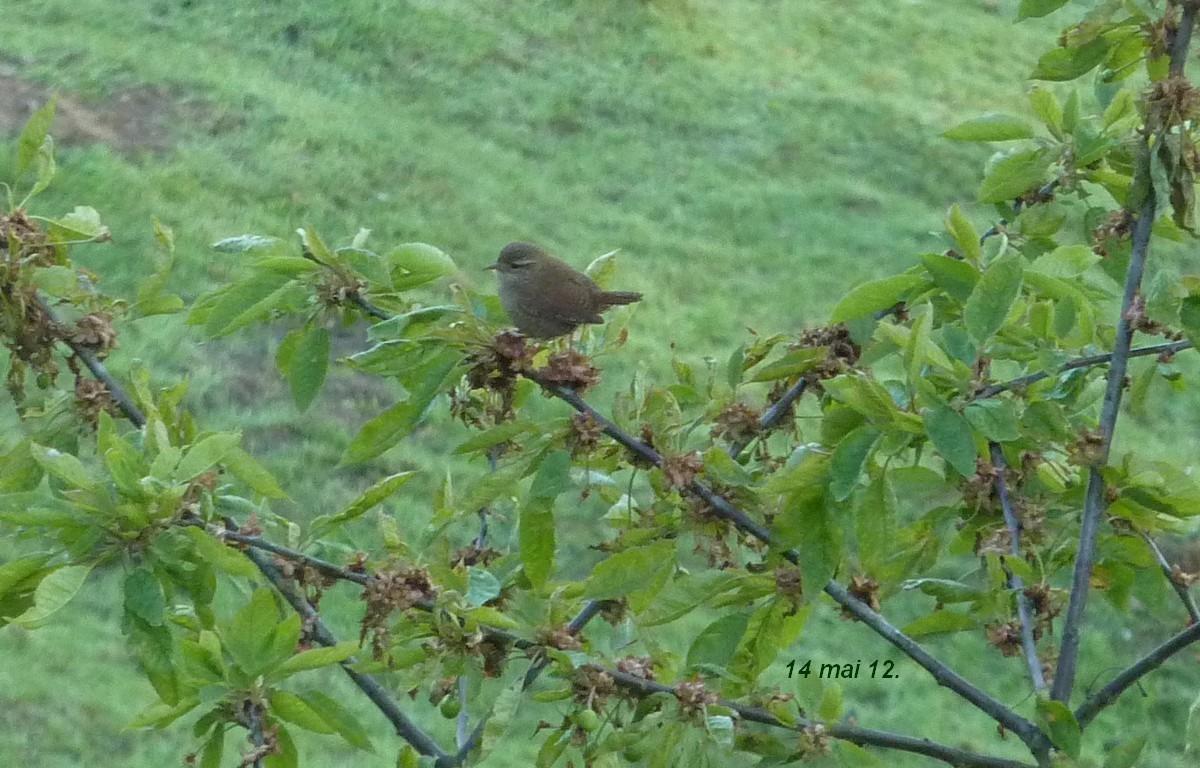 2012. dans ma prairie. mouotns oiseaux renards - Page 2 00636