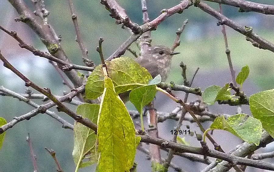 2011: La bio-diversité dans mon jardin.... oiseaux, mouotns, nénuphars. - Page 4 00720