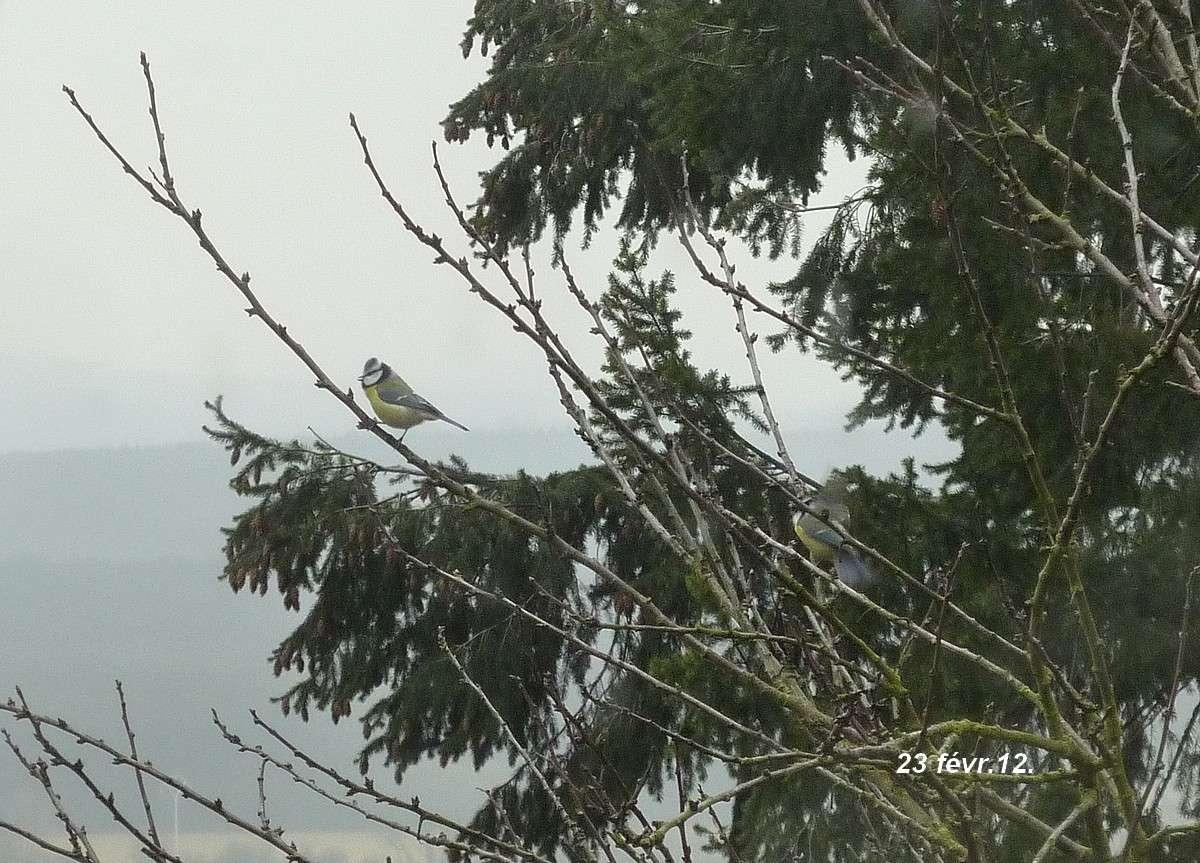 2012. dans ma prairie. mouotns oiseaux renards 00734