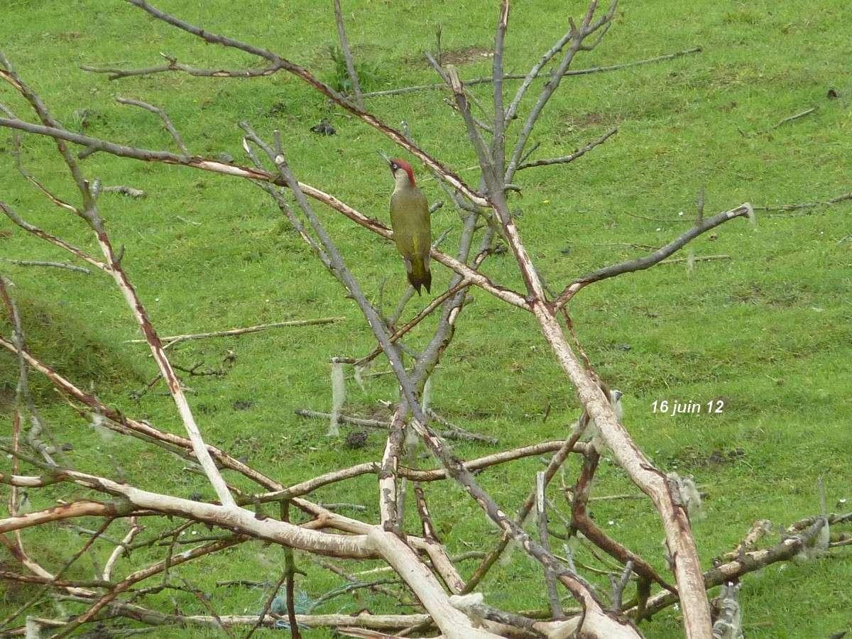 2012. dans ma prairie. mouotns oiseaux renards - Page 2 00826