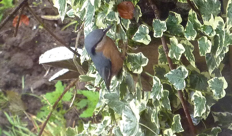 2011: La bio-diversité dans mon jardin.... oiseaux, mouotns, nénuphars. - Page 4 00919