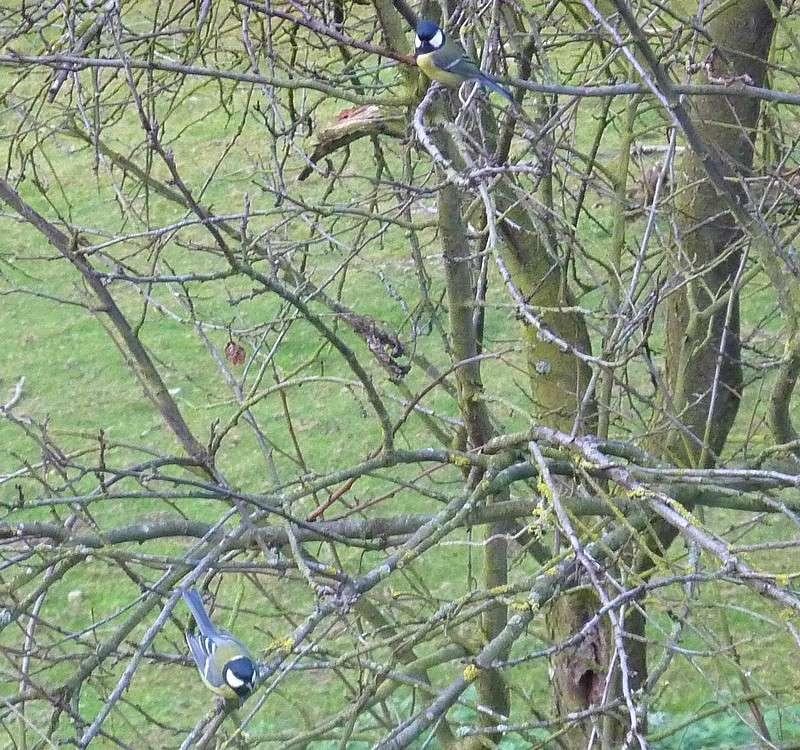 2011: La bio-diversité dans mon jardin.... oiseaux, mouotns, nénuphars. - Page 4 00920