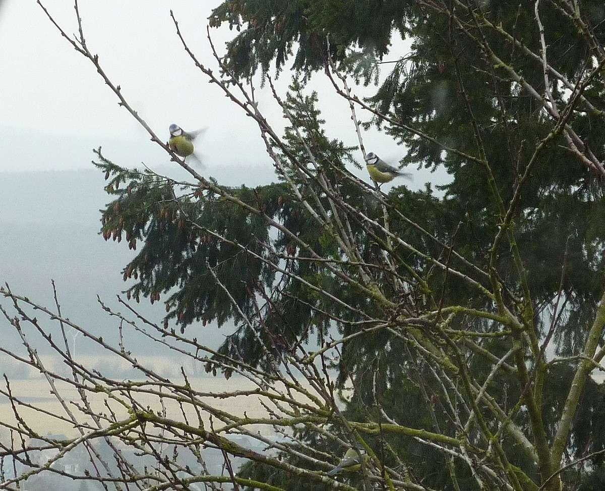 2012. dans ma prairie. mouotns oiseaux renards 00928