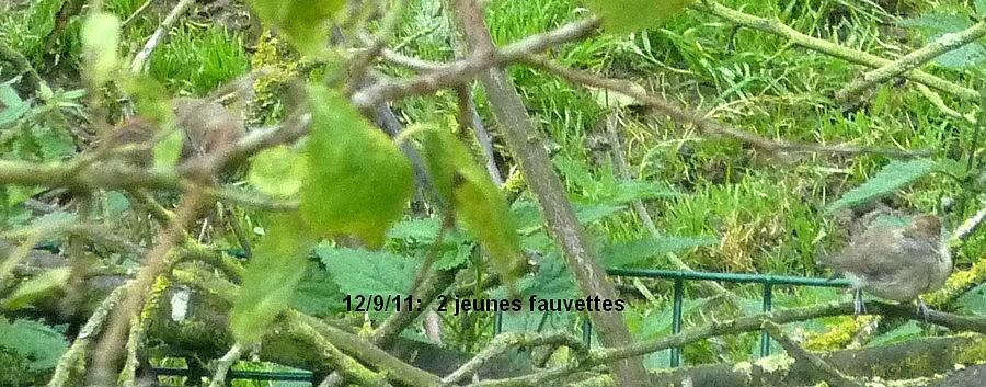 2011: La bio-diversité dans mon jardin.... oiseaux, mouotns, nénuphars. - Page 4 01013