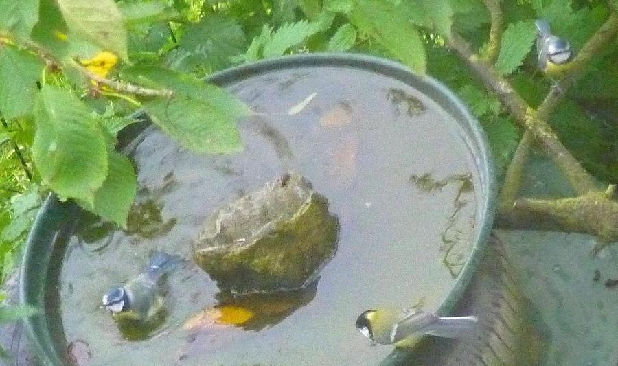 2011: La bio-diversité dans mon jardin.... oiseaux, mouotns, nénuphars. - Page 4 01015