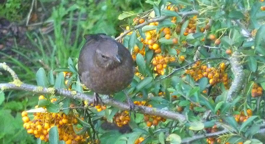 2011: La bio-diversité dans mon jardin.... oiseaux, mouotns, nénuphars. - Page 4 01016