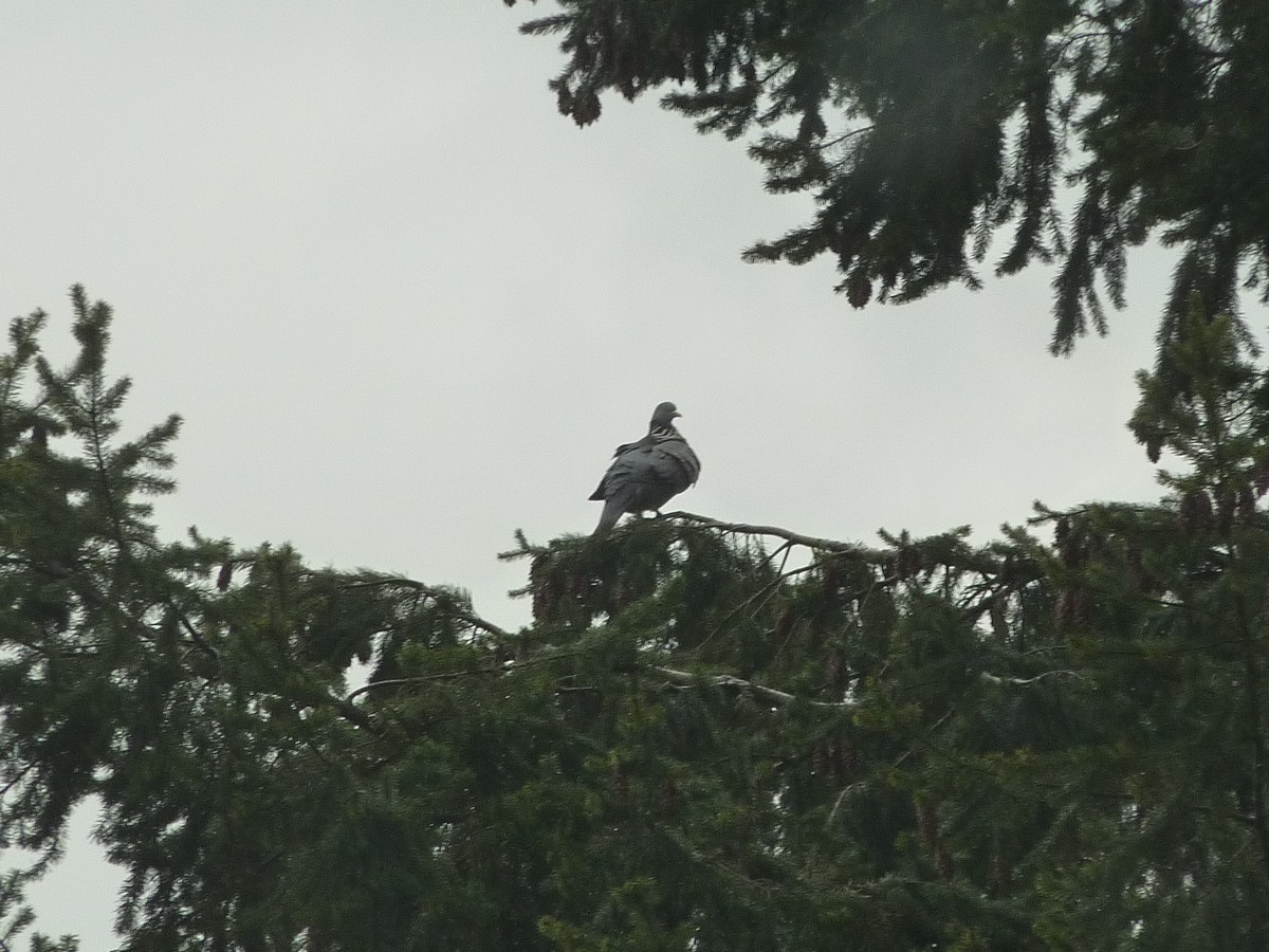 2012. dans ma prairie. mouotns oiseaux renards 01023