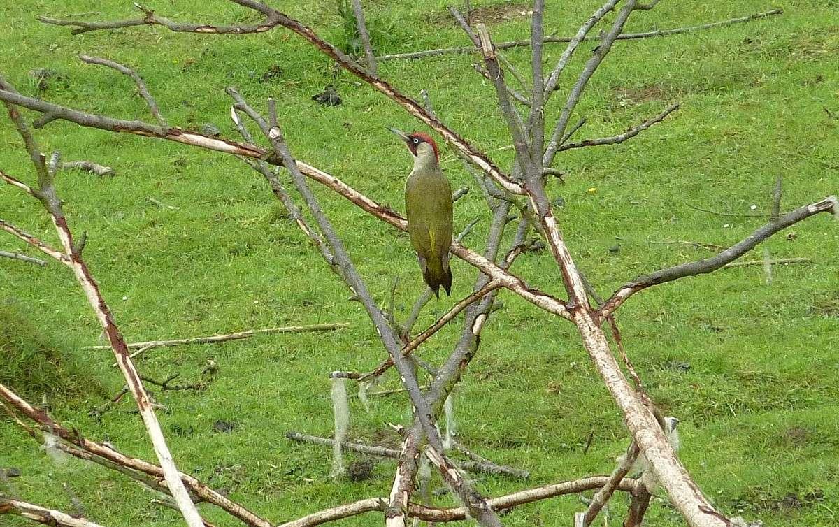 2012. dans ma prairie. mouotns oiseaux renards - Page 2 01025