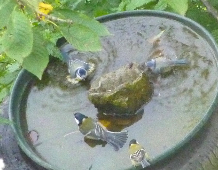 2011: La bio-diversité dans mon jardin.... oiseaux, mouotns, nénuphars. - Page 4 01116
