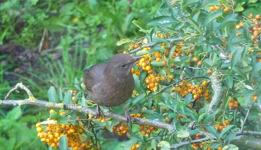 2011: La bio-diversité dans mon jardin.... oiseaux, mouotns, nénuphars. - Page 4 01117