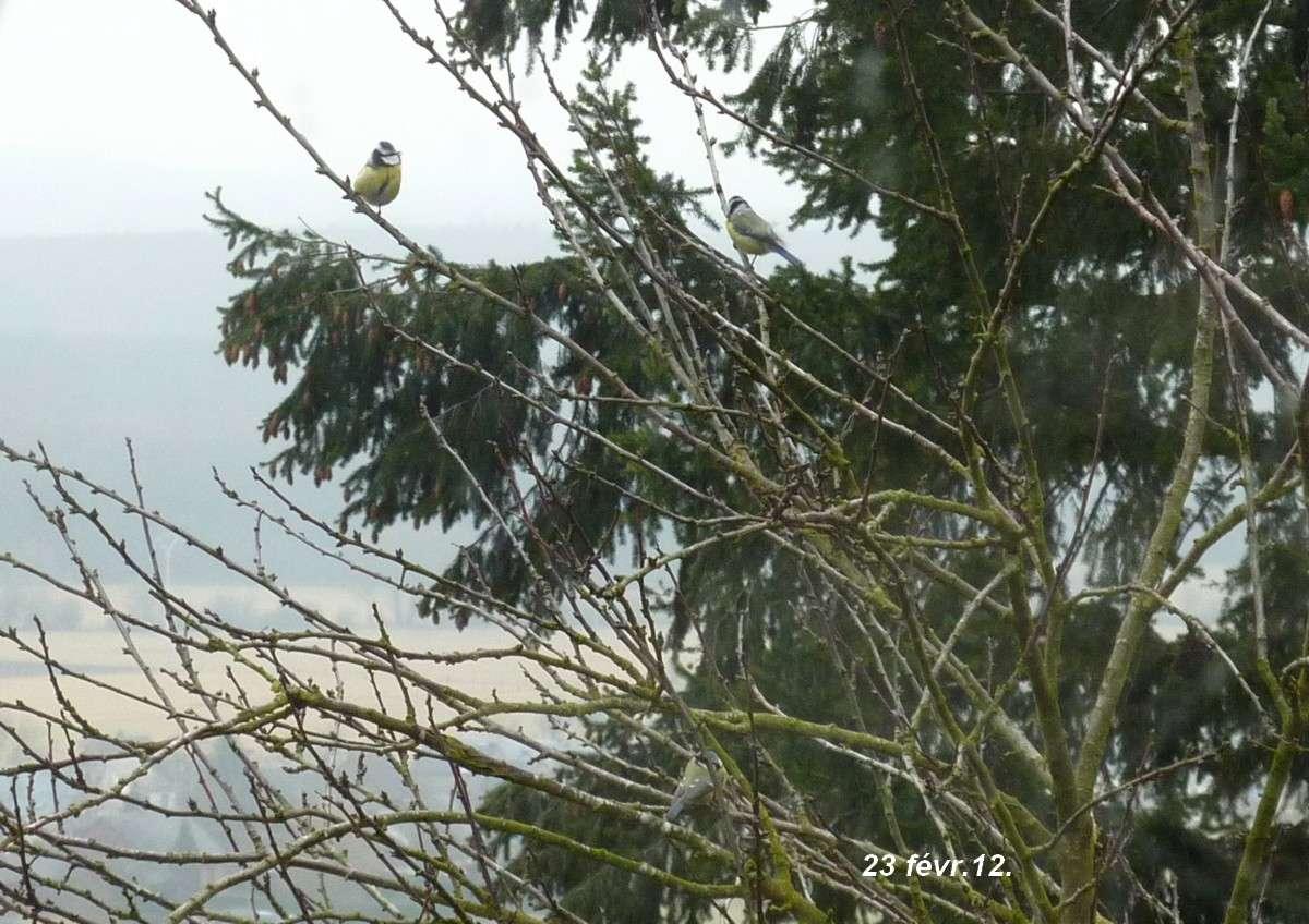 2012. dans ma prairie. mouotns oiseaux renards 01122
