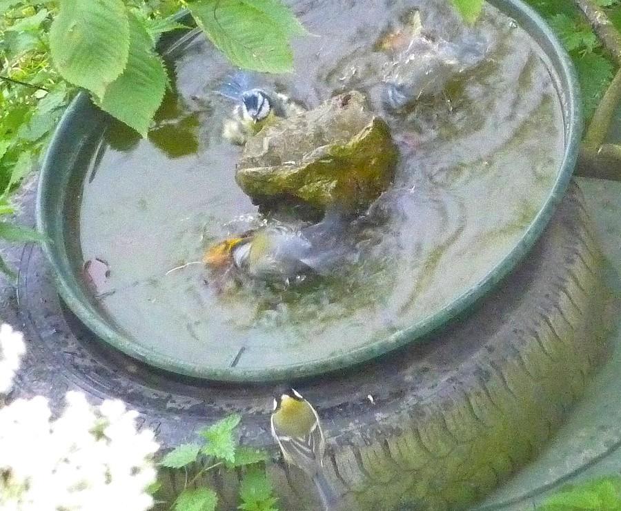 2011: La bio-diversité dans mon jardin.... oiseaux, mouotns, nénuphars. - Page 4 01217