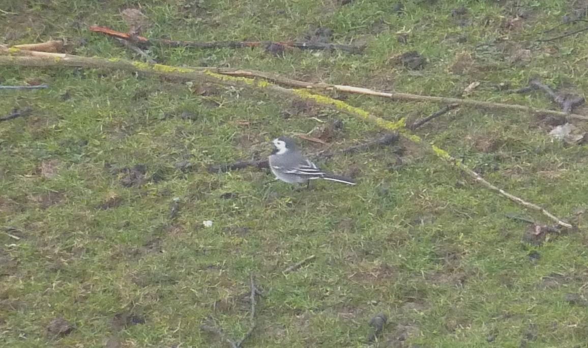 2012. dans ma prairie. mouotns oiseaux renards 01222