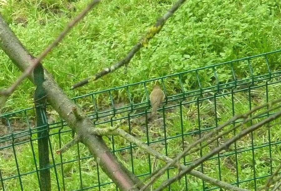 2011: La bio-diversité dans mon jardin.... oiseaux, mouotns, nénuphars. - Page 4 01315