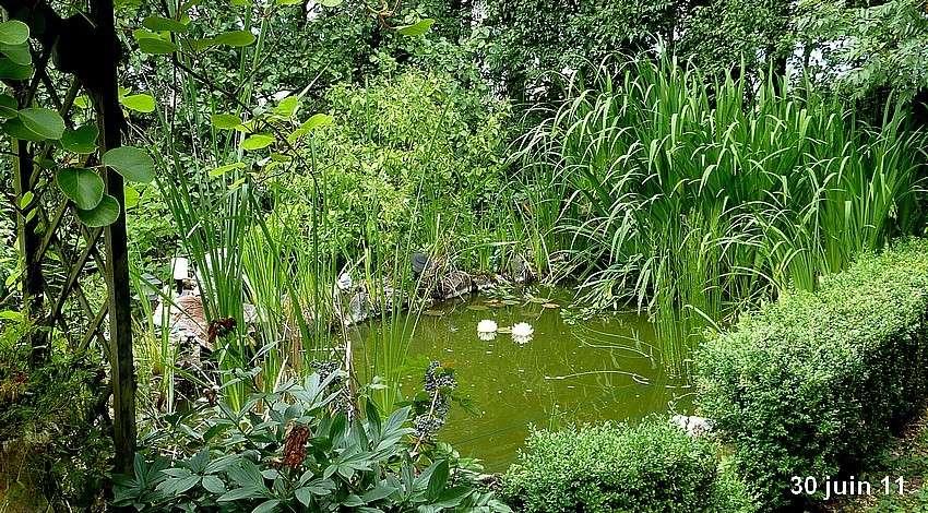 2011: La bio-diversité dans mon jardin.... oiseaux, mouotns, nénuphars. - Page 3 01410