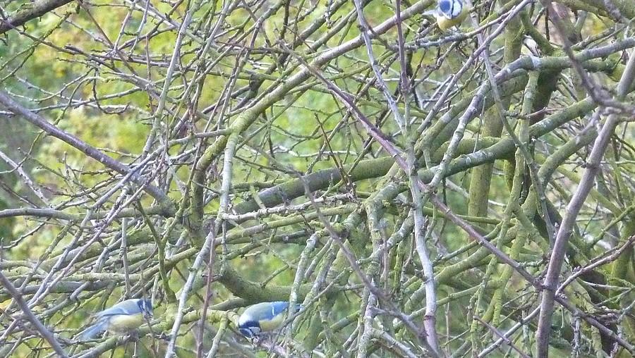 2011: La bio-diversité dans mon jardin.... oiseaux, mouotns, nénuphars. - Page 4 01417