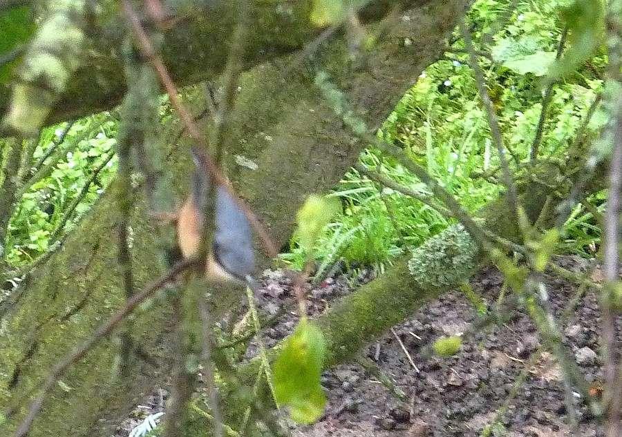 2011: La bio-diversité dans mon jardin.... oiseaux, mouotns, nénuphars. - Page 4 01514