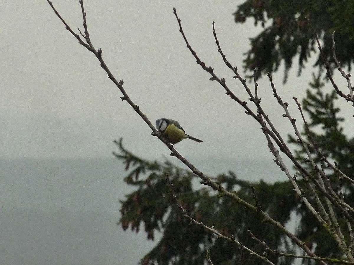 2012. dans ma prairie. mouotns oiseaux renards 01520