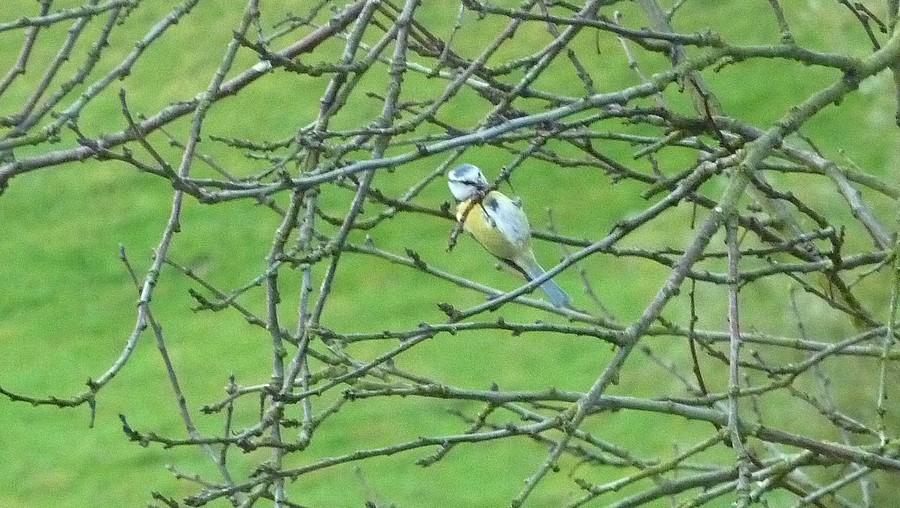 2011: La bio-diversité dans mon jardin.... oiseaux, mouotns, nénuphars. - Page 4 01615