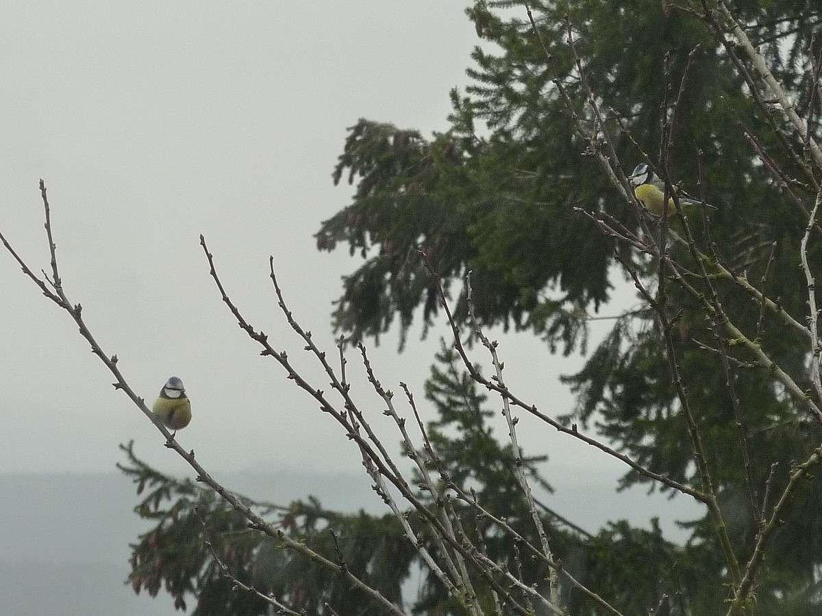 2012. dans ma prairie. mouotns oiseaux renards 01619