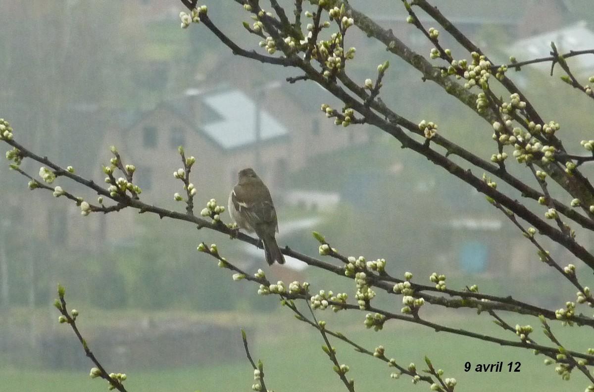 2012. dans ma prairie. mouotns oiseaux renards 01621