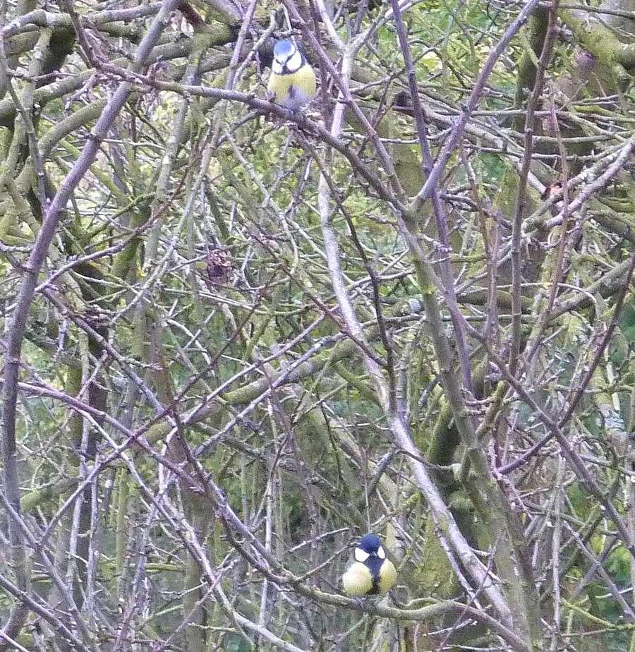 2011: La bio-diversité dans mon jardin.... oiseaux, mouotns, nénuphars. - Page 4 01714