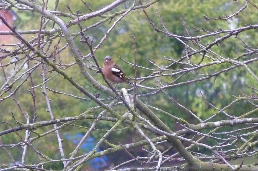 2011: La bio-diversité dans mon jardin.... oiseaux, mouotns, nénuphars. - Page 4 01915