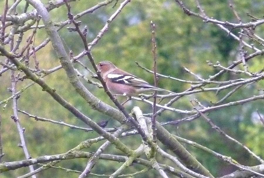 2011: La bio-diversité dans mon jardin.... oiseaux, mouotns, nénuphars. - Page 4 02015