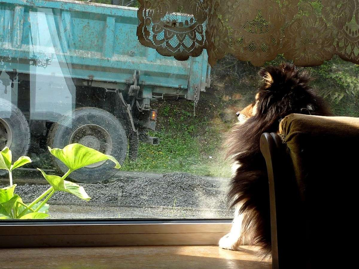 7 mai 12: réparation de la route sous l'oeil très attentif de mes shets. 02119