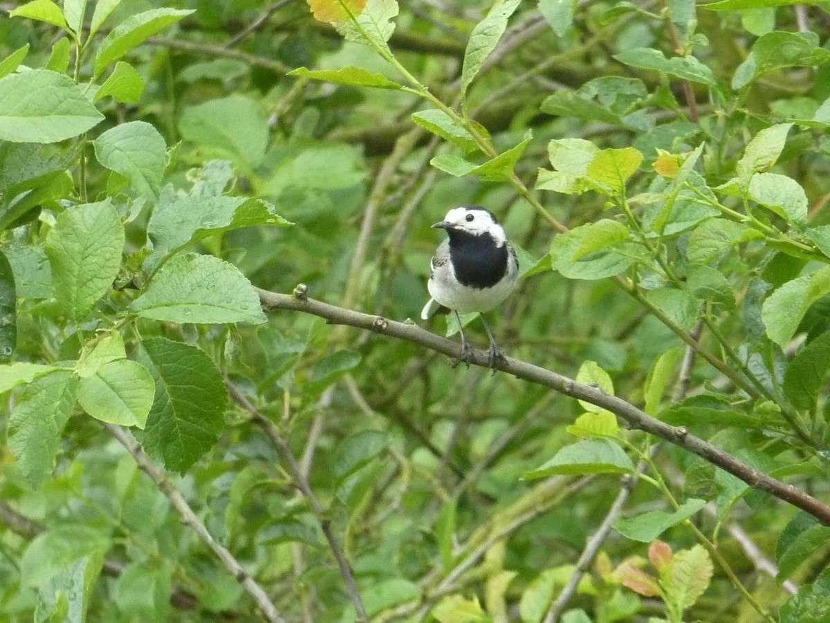 2012. dans ma prairie. mouotns oiseaux renards - Page 2 02121