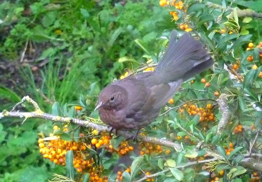 2011: La bio-diversité dans mon jardin.... oiseaux, mouotns, nénuphars. - Page 4 02310