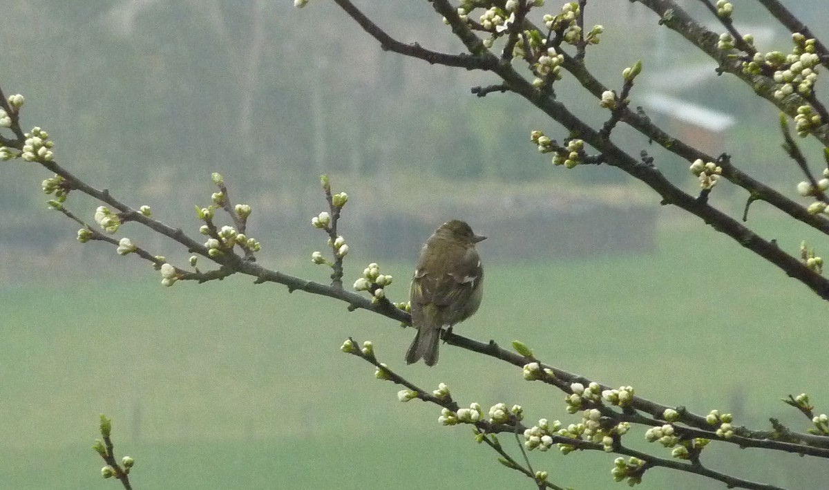2012. dans ma prairie. mouotns oiseaux renards 02516