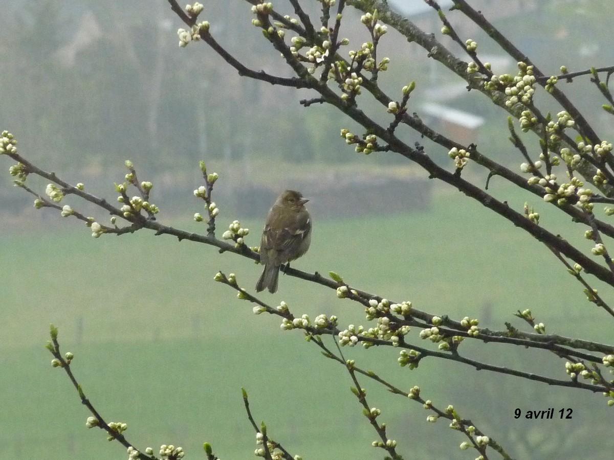 2012. dans ma prairie. mouotns oiseaux renards 02617