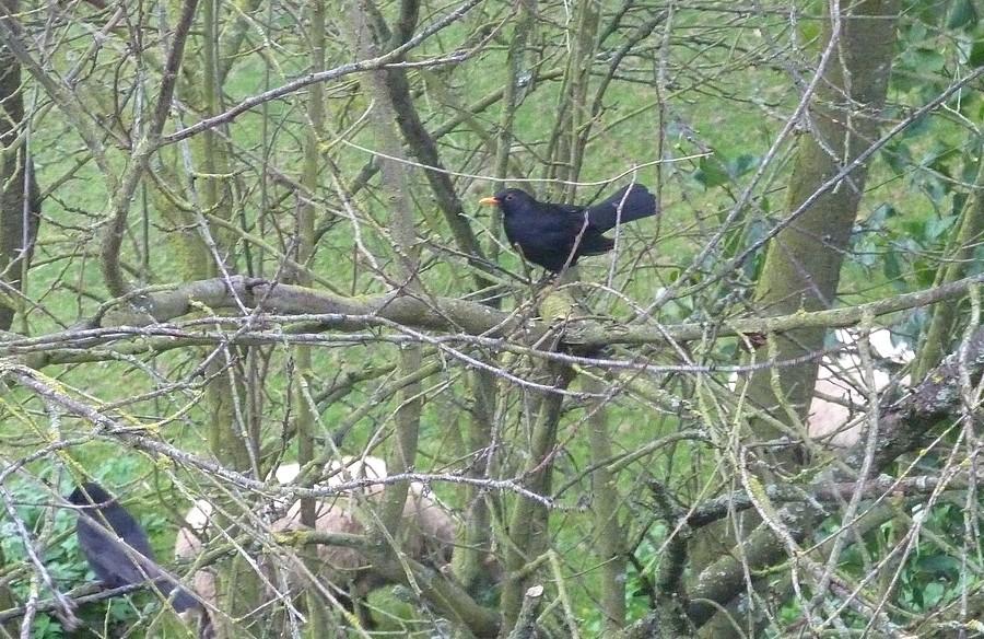 2011: La bio-diversité dans mon jardin.... oiseaux, mouotns, nénuphars. - Page 4 02711