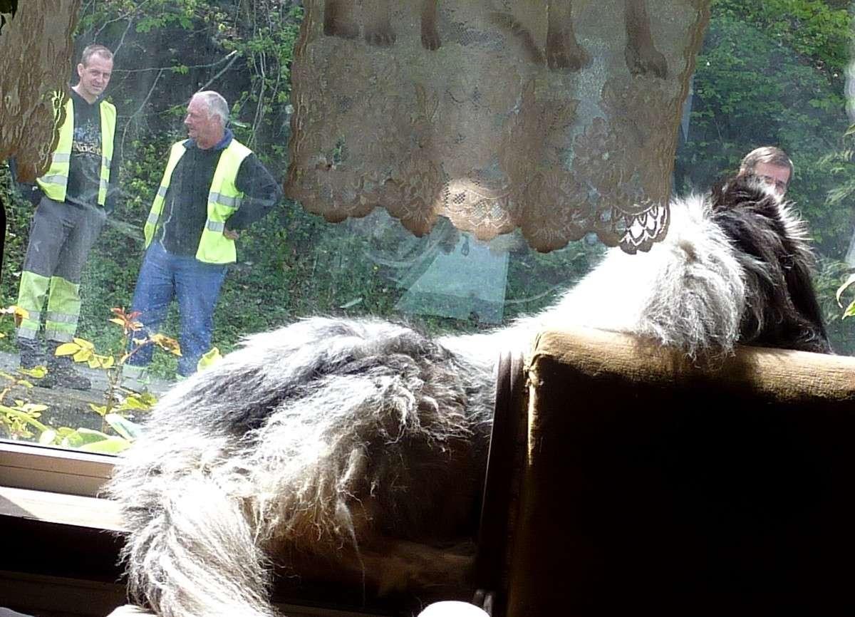 7 mai 12: réparation de la route sous l'oeil très attentif de mes shets. 02815