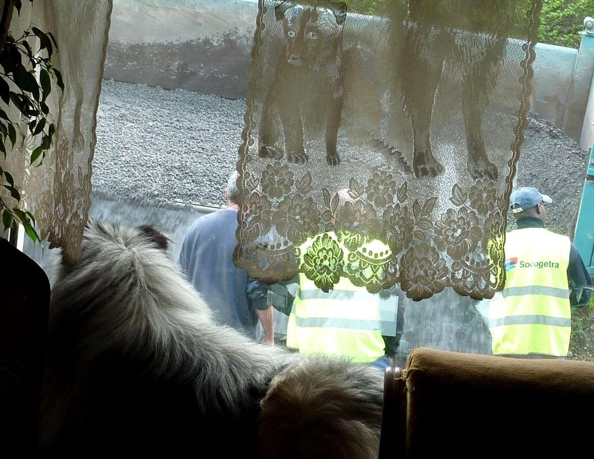 7 mai 12: réparation de la route sous l'oeil très attentif de mes shets. 06115