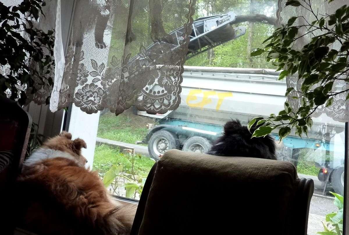 7 mai 12: réparation de la route sous l'oeil très attentif de mes shets. Rapara11