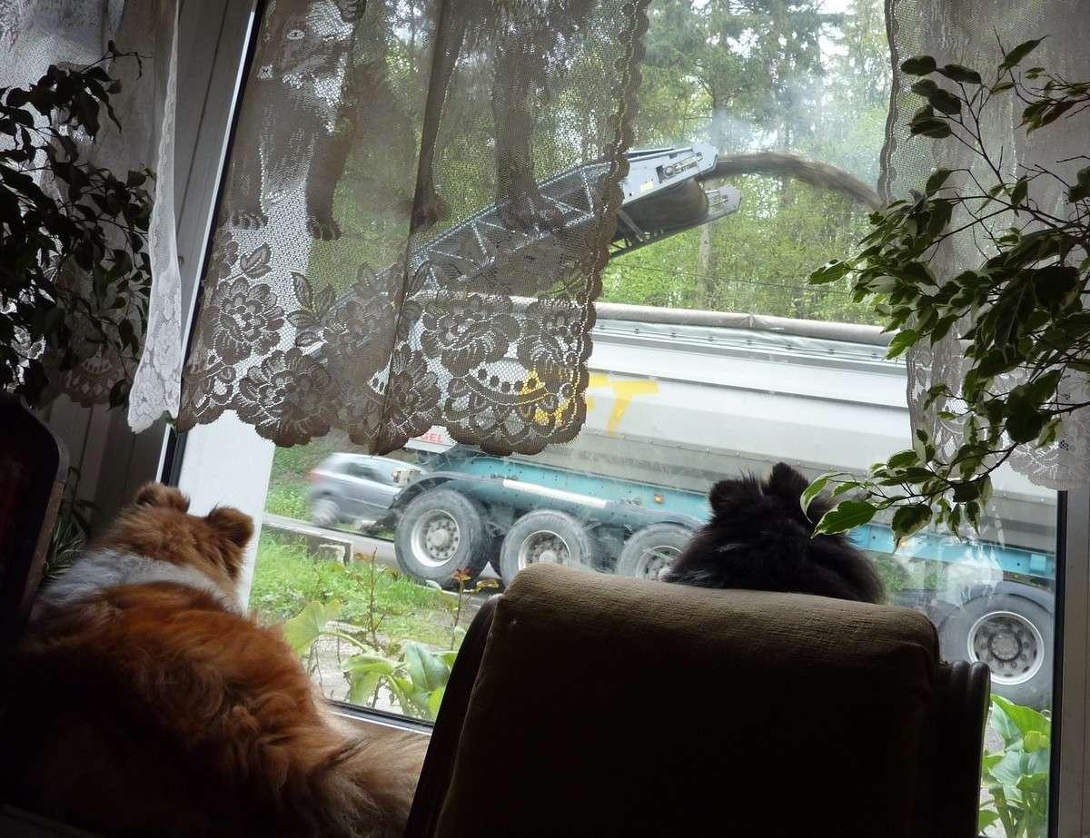 7 mai 12: réparation de la route sous l'oeil très attentif de mes shets. Rapara12