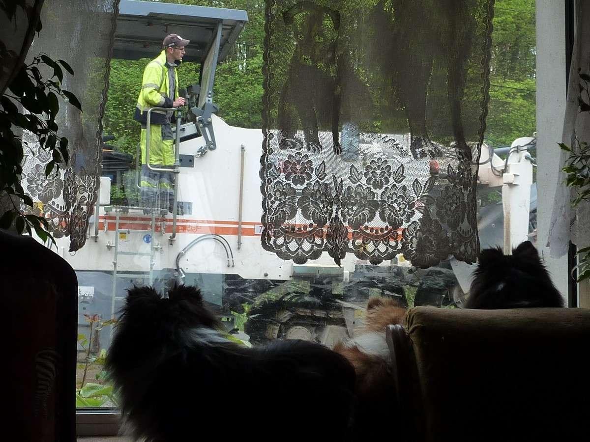 7 mai 12: réparation de la route sous l'oeil très attentif de mes shets. Rapara16